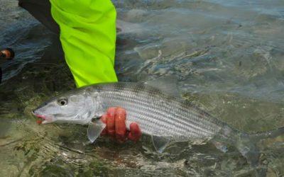 La elección de la mosca en la Pesca de Bonefish Parte 2
